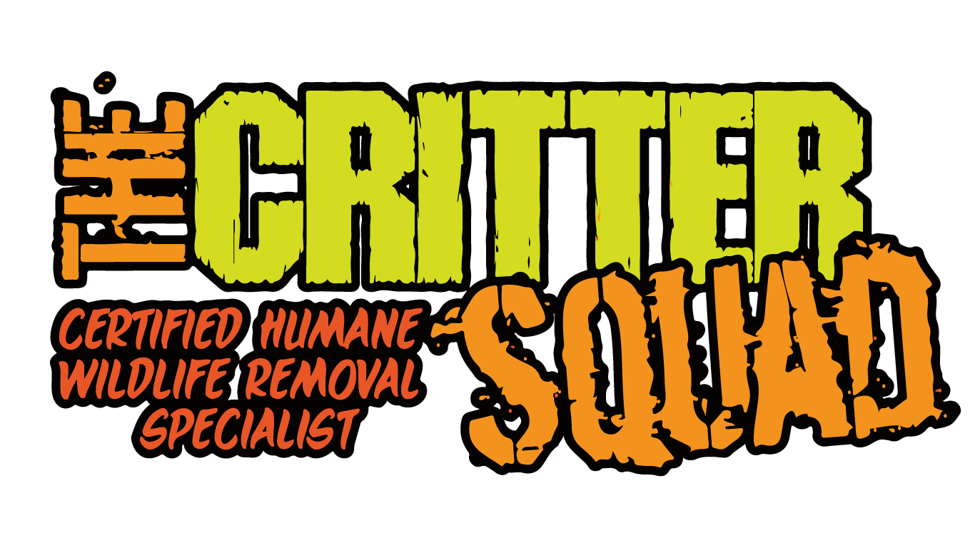The Critter Squad Texas Wildlife Removal & Control